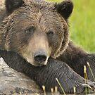 Wildlife ~ Barbara Burkhardt by Barbara Burkhardt