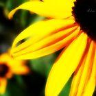 Mellow Yellow by Rebecca Herren