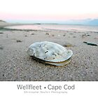 Wellfleet, Cape Cod Poster (Oyster Version) by Christopher Seufert