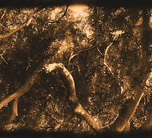Study in Light and Shadow: Lush Foliage and Tangled Branches in Sepia #2 by Ivana Redwine