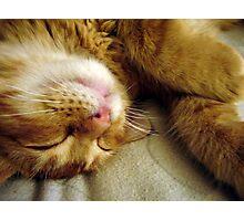 Sleepy Pocket Photographic Print