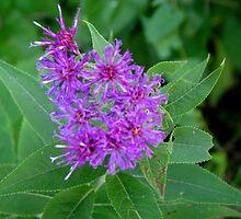 Purple Weed by Linda Miller Gesualdo