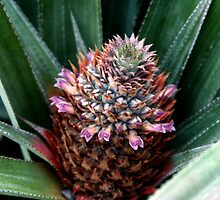 Pineapple Flower by solena432