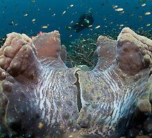 Giant Clam and Diver by Hergen Spalink