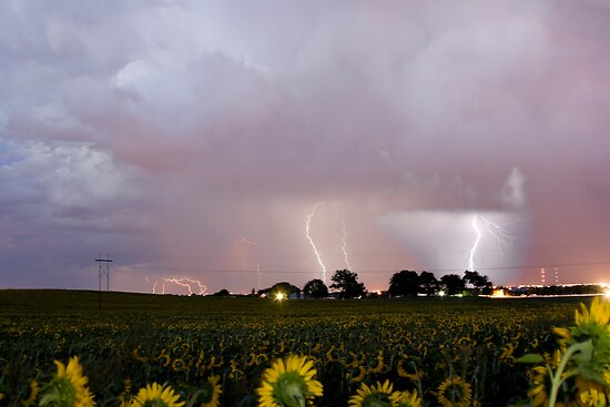 Sunflower Field Thunderstorm by Bo Insogna