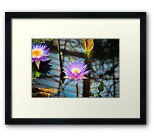 Hot Hot Lily Framed Print