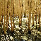 Green Lagoon by RaiZdbyDINGOES