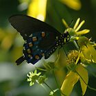 Butterfly & Bee by Rick  Friedle