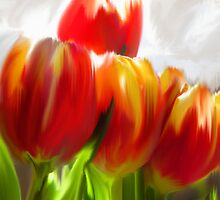 Red Tulips by cschuh