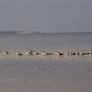 Terns on Sandbar by May Lattanzio