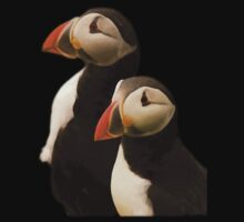 Puffins by Jon Lees