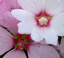 Pink and White by plunder