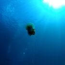 jelly fish in ray by Hilly