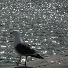 Seagul and gleaming sea by Riaan Hefer