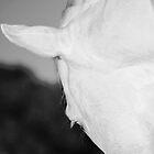 Stallion - greyscale shot by chelka09