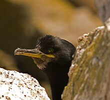 Shag by Jon Lees