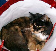 Bag Lady by Ladymoose