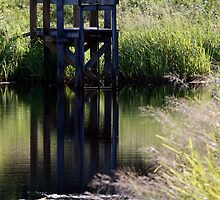 Old Dock Among Grass by Wolf Read