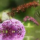 Butterflies in the Mist.... by Trudy Wilkerson