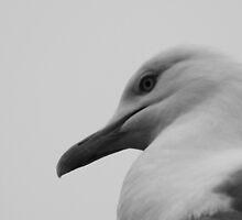 Gulls Head by shane22