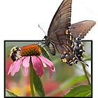 Eastern Swallowtail Butterfly by Deb Snelson