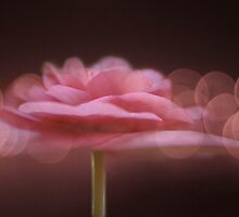 Begonia & Bokeh by enchantedImages