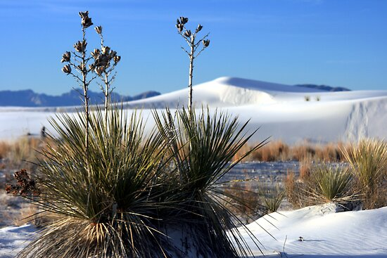 Yuccas and White Sands by Terence Russell