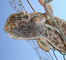 Chameleon Understudy by taiche