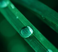 drop on the grass by mariette sardin