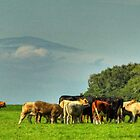Cows In Field by SimplyScene