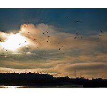 Flocking Seagulls!  Photographic Print