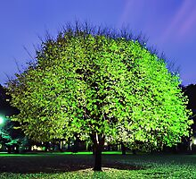 Fluoro Tree by Mark Boyle