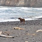 dog on beach by laurafay
