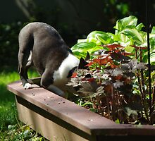 Digging in the flower bed?  No, not me! by Karen Checca