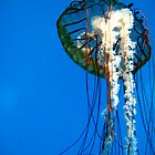 Jellyfish by Greta  Hasler