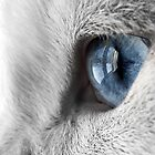 One Blue Eye by Douglas M. Paine