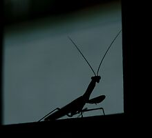 082209-1   IF INSECTS HAVE NIGHTMARES... by MICKSPIXPHOTOS