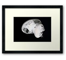 Moon jelly (Aurelia labiata) Framed Print