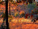 Deep Within Autumn by NatureGreeting Cards ©ccwri