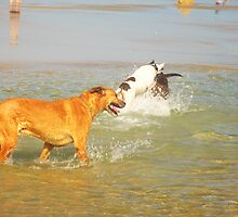 Dogs Playing by Chris Begg
