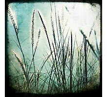 Grass series #1 Photographic Print