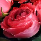 pink roses... by Patriciakb