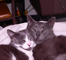 Two cats snuggling up together by jeni43