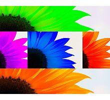 Sunflower Interrupted Photographic Print