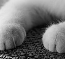 Please 'Paws' for a moment by Douglas M. Paine