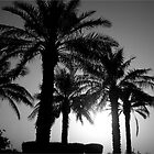 Hiding behind the palm trees by Dana Kay