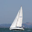 Sailing on the SF Bay by Peggy Berger