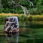The Stump by Chris Morrison