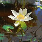 Lotus and water reflections by Marilyn Baldey