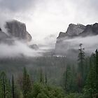 Yosemite Fog by Donn Hoyer